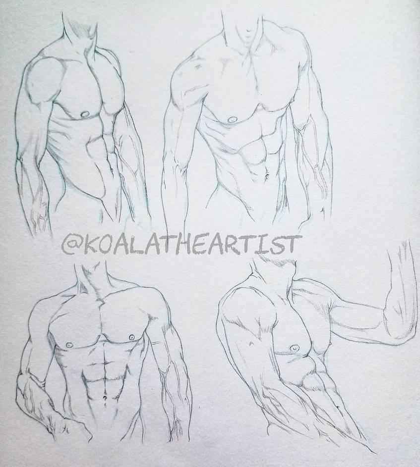 Male anatomy chest
