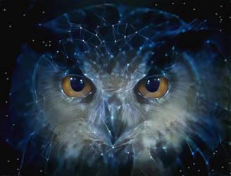 Owl night long by eReSaW
