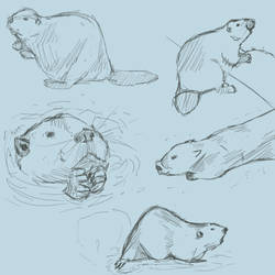 Beaver sketches by Dragonslayer999