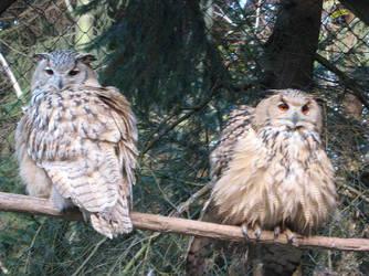 Hogwarts' Owlery by Irmanamers