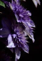 flowers of a ghost.. by LostMonsoon