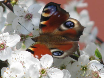 Butterfly in spring by Ellaidathea