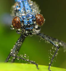 dragonfly 4 by decmeister