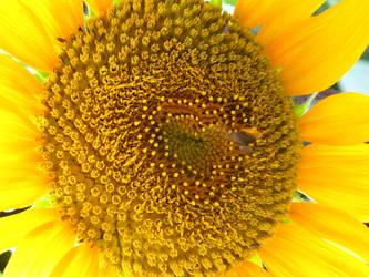 love.on.flower by s1nacH