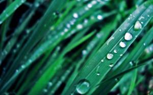 Morning Dew by art-io