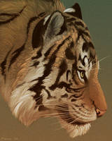 Tiger Portrait by Dunewolf