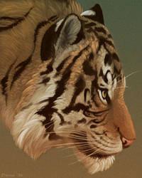 Tiger Portrait by Dunewolf