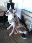 Lifesized Wolf by Kreativjunkie