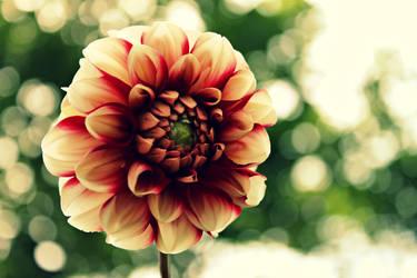 Summer's flower by SunMorning