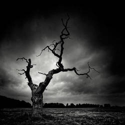 The Last Tree by xMEGALOPOLISx