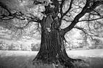 Portrait of tree VII by xMEGALOPOLISx