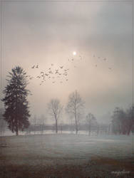 In the Mist by groby