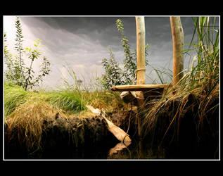 marsh by sxan