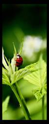 The Ladybug II by sxan