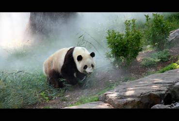 misty panda by sxan