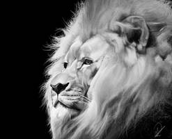 Lion by PaulDarkdraft