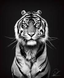Tiger by PaulDarkdraft