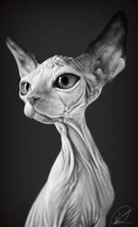 Sphynx by PaulDarkdraft