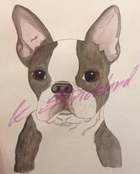 Watercolor Boston Terrier by atreyu917
