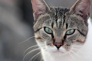 Occhi di Gatto by Bliss89