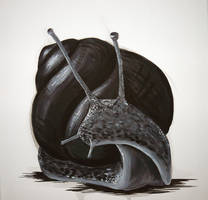 snail by Lunicqa