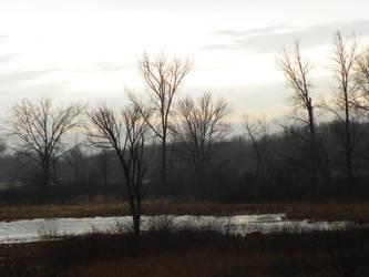 Marsh 11 by kbcollins