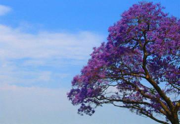 Jacaranda by Any-thing-