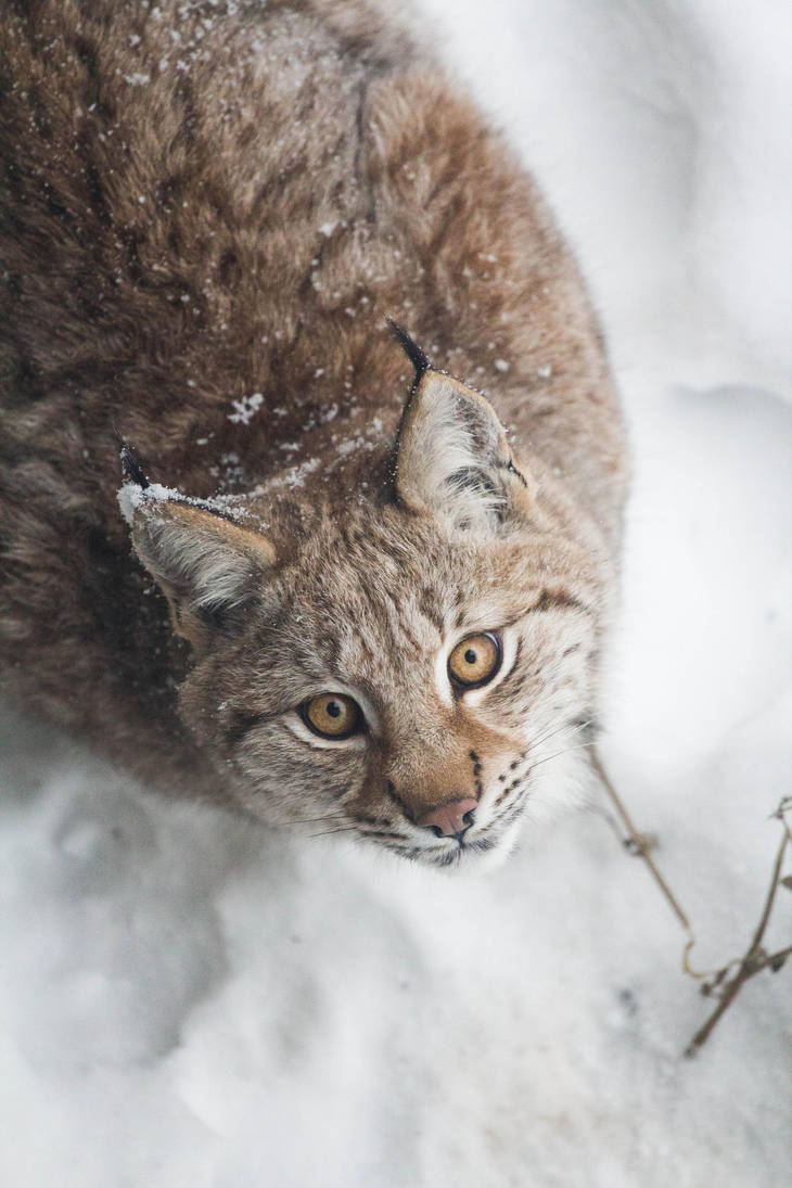 Winter Lynx Look by JRL5