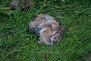 Kitten Cuddle by JRL5