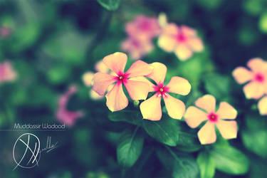 Twinkle Twinkle Pinky Stars by muddassir