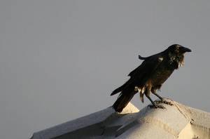 Good morning brother raven by Ravenari
