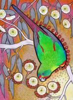 Losing Altitude - Swift Parrot by Ravenari