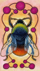 Red Bumblebee (Bombus lapidarius) by Ravenari