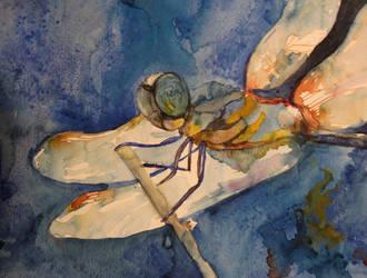 dragonfly II by lenischoen