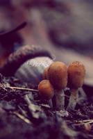 Mini Mushrooms by ReachForTheStarfish