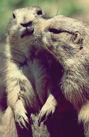 Just Something on your Cheek by Kovitlac