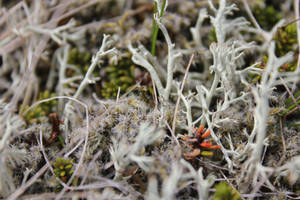 Micro Forest by spartout