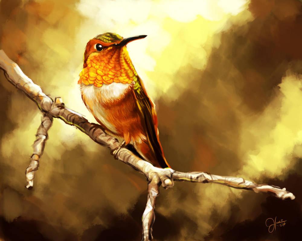 Rufous Hummingbird by JonathanHankin
