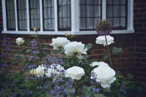 British Garden by AlmaBlack