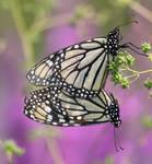 butterfly style by bydandphotography