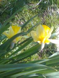 Yellow flower by Monyszek