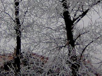 Winter by Monyszek