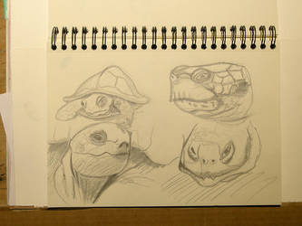Doodles Studies Sketches11 - Turtle - Tortoise by CiNiTriQs