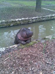 The sweet hippo by Kira--Raito