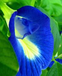Gorgeous Blue Flower by DeanaRackley