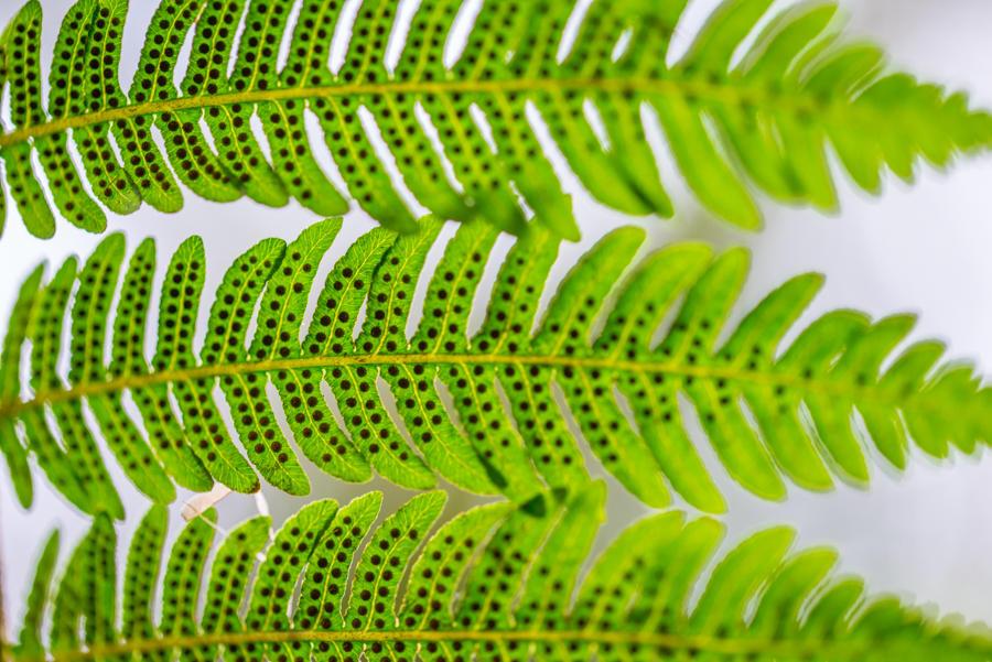Ferns by roarbinson