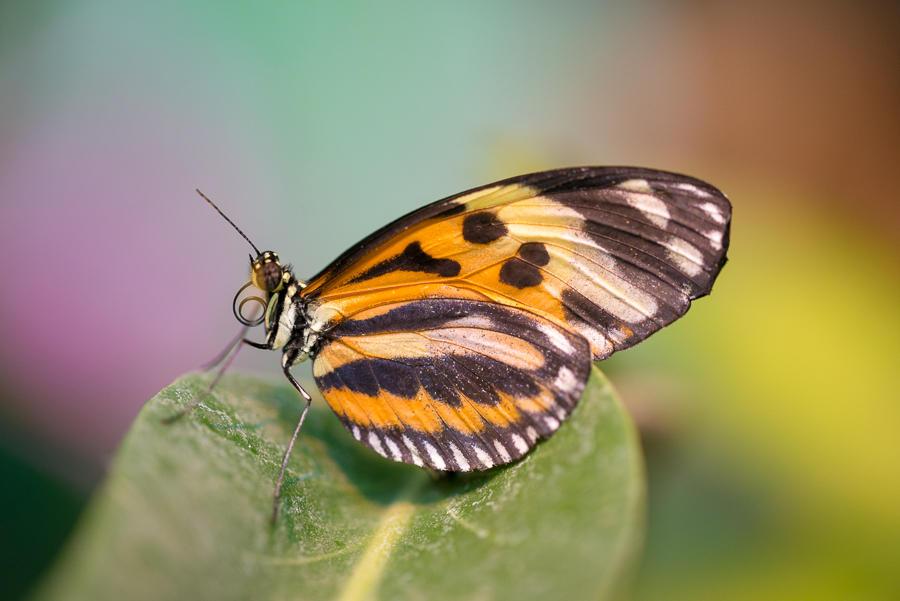 Butterfly by roarbinson