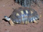 Tortoise 2 by sbmdestock