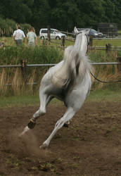 Grey Arabian Canter Back by Jello88