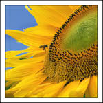 Playing in The Sun II by kucingitem